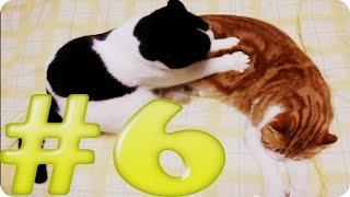 Приколы с животными №6   Кошачий массаж  Смешные животные