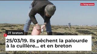 JT Breton du lundi 25 mars 2019. Ils pêchent la palourde à la cuillère... et en breton