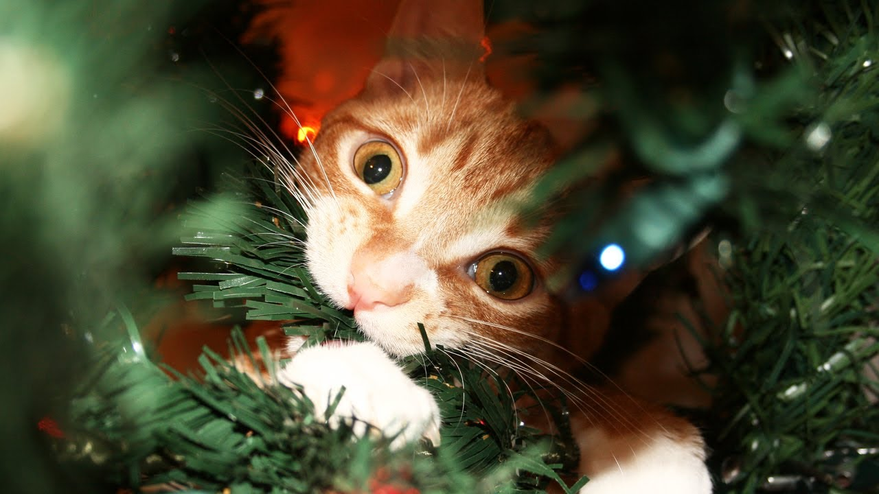 A Cat's Guide to Christmas! - YouTube