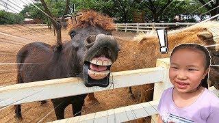ตื่นเต้น !! ให้อาหารม้ากับแกะ ที่ฟาร์มโชคชัย - Chokechai farm