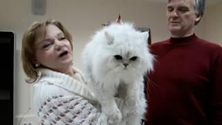 Клуб персидских классических кошек СИЛЬВЕР системы PCA