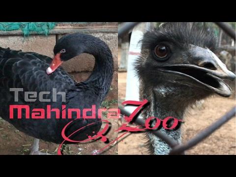 Tech Mahindra Zoo : Bahadurpally