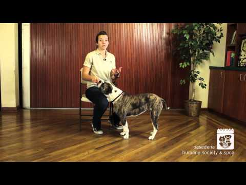 Teaching Your Dog the Sit Command