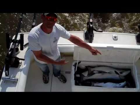 Sea Dog Charters - Fishing Sheboygan Wisconsin 2010