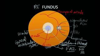 High Yield Topic - Clinical Anatomy Of Retina