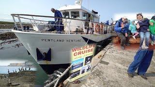 Bootstour Orkney Inseln I Wildlife Cruise I Schottland 🚌 vlog#19