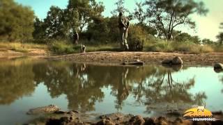 Rod's SA Savanna African Hunt