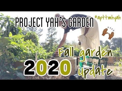Project Yah'sGarden- Fall Garden UPDATE ☀️