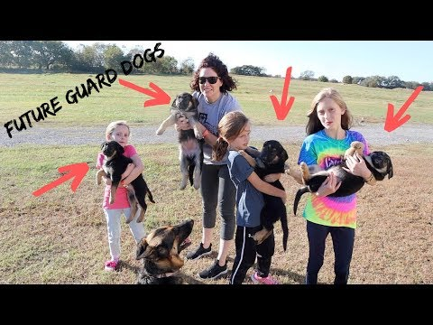 Picking Out Our German Shepherd Puppy Was So HARD SHE CRIED!