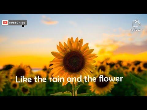 Luis Fonsi Girasoles English Lyrics Youtube