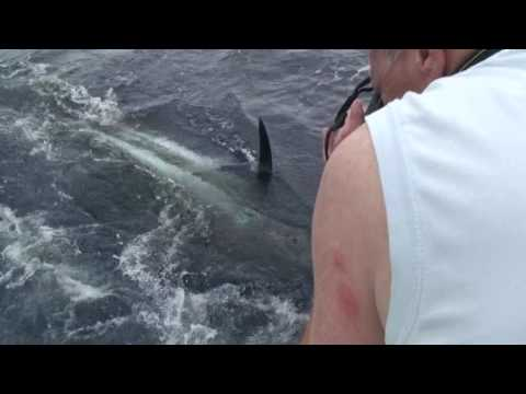 Madeira Marlin 2, 1000lb + Double Hook Up Russ Beckwith