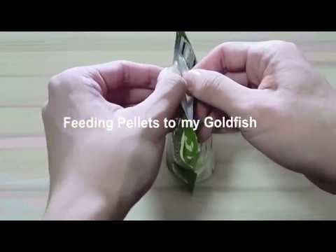 Feeding Pellets To Goldfish