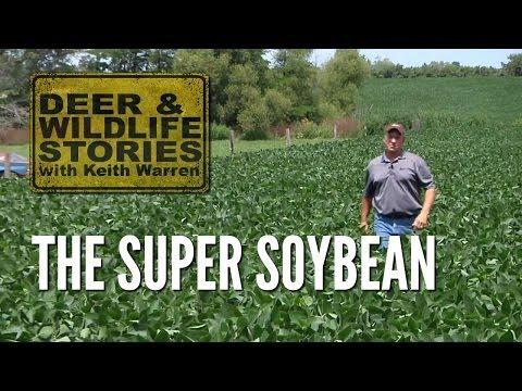 The Super Soybean - Deer & Wildlife Stories   Deer Farming