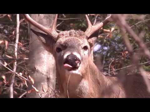 What You Should Know About Hunting Older, Smarter Bucks
