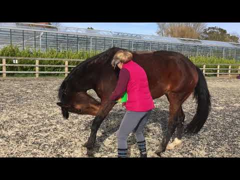 Baited stretches with Vienna 16 days post op PART 1
