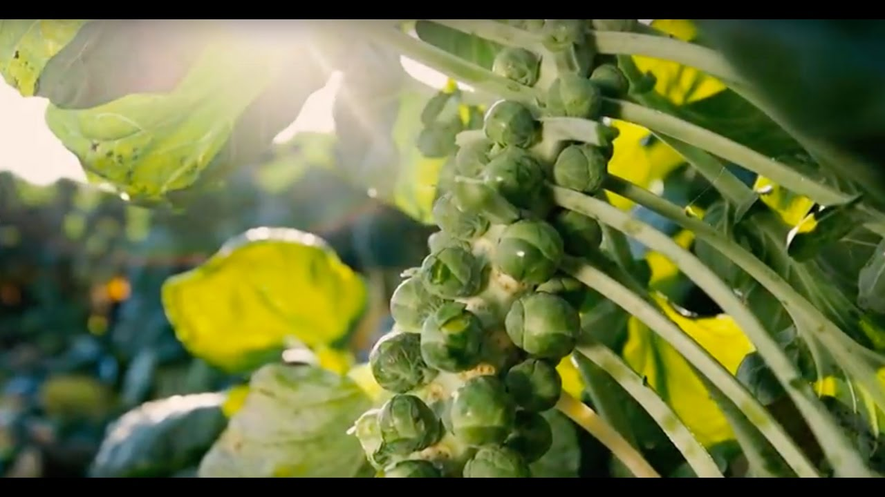 Tesco | Working round the clock for perfect sprouts at Christmas