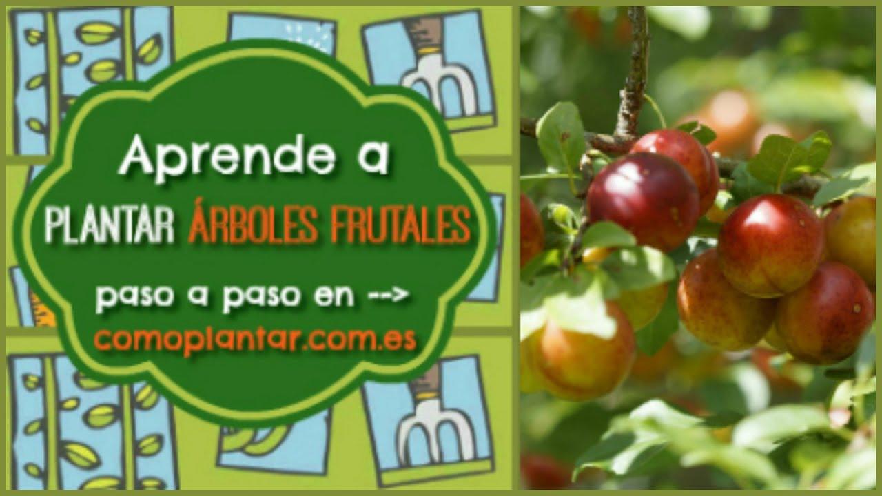 C mo plantar rboles frutales youtube - Cuando plantar frutales ...