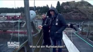Wie gesund ist Lachs aus der Aquakultur? Besuch einer Lachsfarm in Norwegen - Rach tischt auf! - ZDF