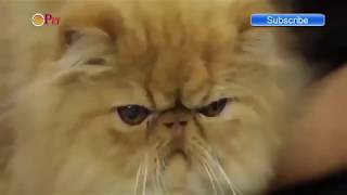 Funny Cats  - Funny Video - Funny Animals Videos