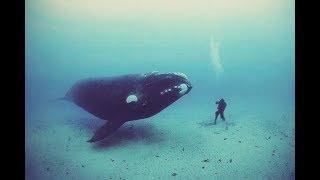 Balena nu-i permitea scafandrului sa plece! Cand a inteles de ce, a ramas socata !