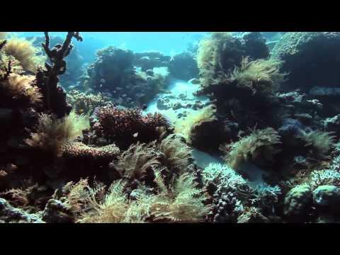 Palau: The Micronesia Challenge