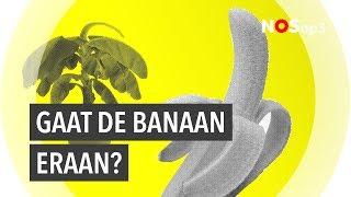 Een bananendrama | NOS op 3