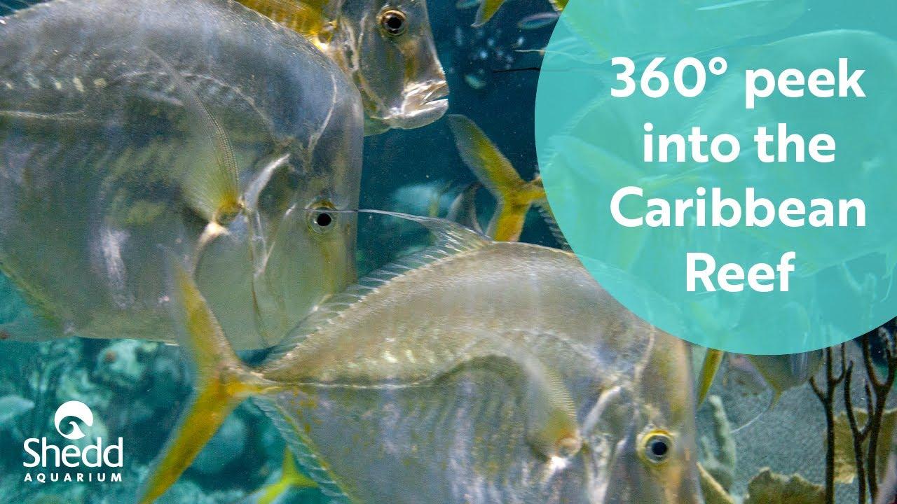 Shedd Aquarium Discount With Link Card - Aquarium Views