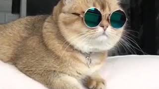 кот в очках.  —Rockstar cat 😎