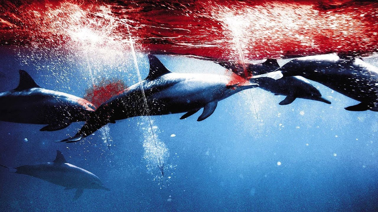 Dolphin Trainer datant Ocala rencontres