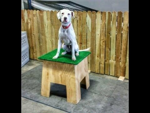 Max - Dalmation Mix - 2 Week Board & Train, Best Dog Trainers Omaha Nebraska