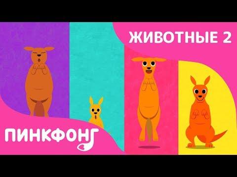 Кенгуру — Стубиду Кенгуру | Песни про Животных | Пинкфонг Песни для Детей