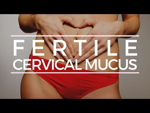 Are You Able To Have Fertile Cervical Mucus although not Ovulate