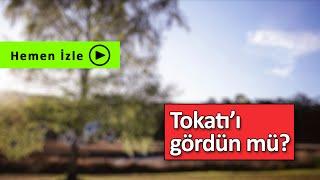 TOKAT | AmcaOğlu