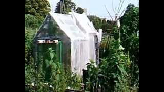 Pallet Greenhouse, inexpensive polytunnel