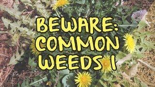 Beware: Common Weeds I