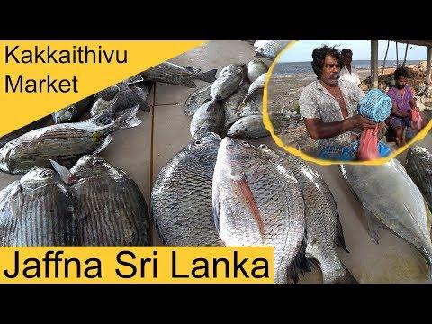 Jaffna Kakkaithivu Fish Market Sri Lanka E1