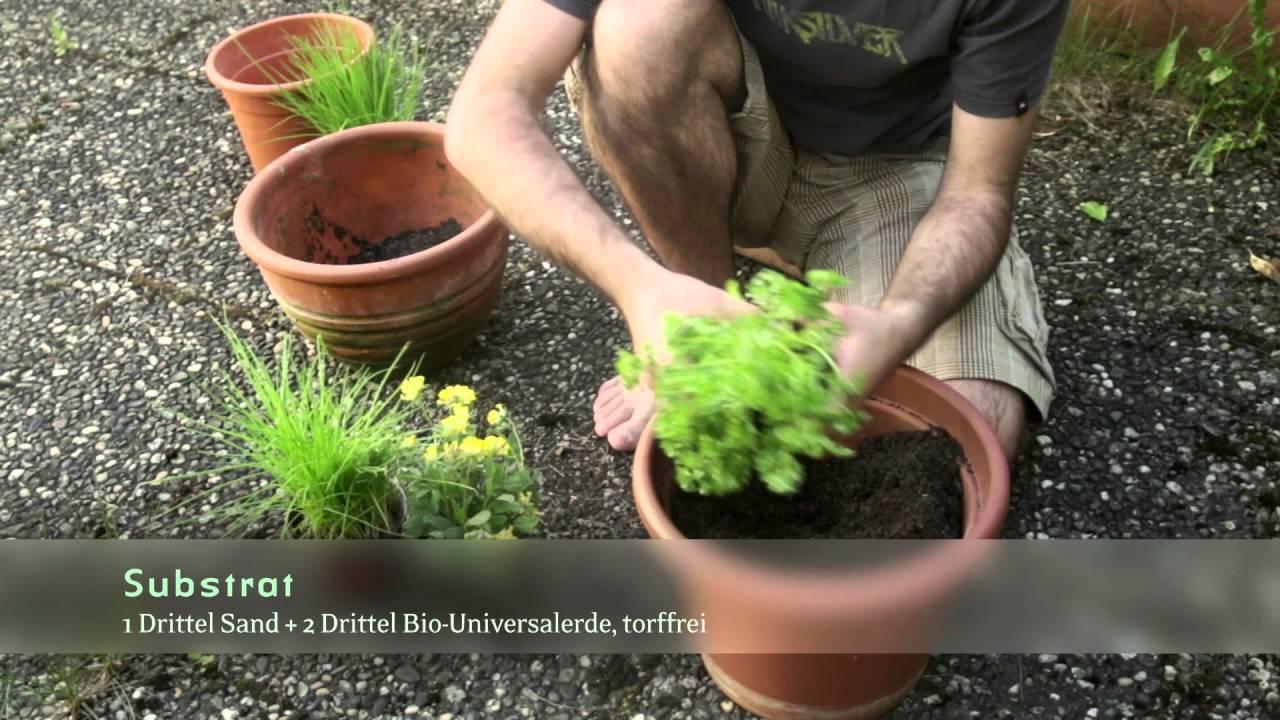 bioterra gartentipp: kräuter im topf - youtube, Gartengerate ideen
