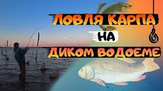 Ловля КАРПА на диком водоеме на фидер Как выбрать место для удачной рыбалке Рыбалка с ночевкой
