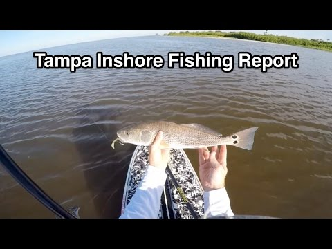 Tampa Fishing Report 2015 - Cypress Point Park
