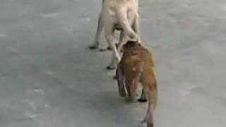 Monkey vs. Dog: Battle of the Rope