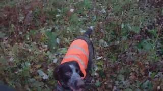 Охота на вальдшнепа с легавой