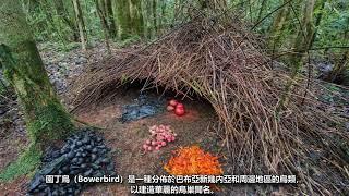 多種奇特的鳥巢