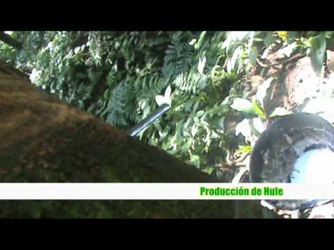 Produccion Hule, ECC-USAC-2011