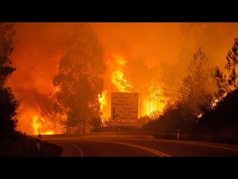 Biggest Tragedy  At Least 61 Killed, Dozens Injured in Portugal Wildfires