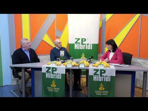 Agrovizija,  ZP HIBRIDI 20.3.2021