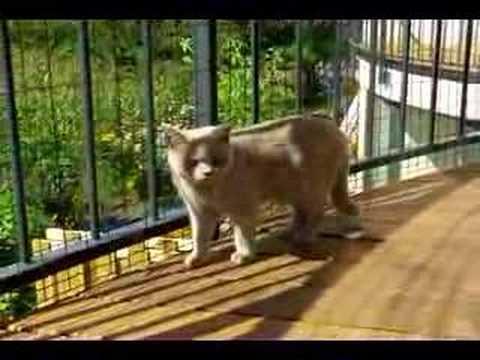 Cloture pour chat clotures pour chats youtube - Cloture electrique chat ...