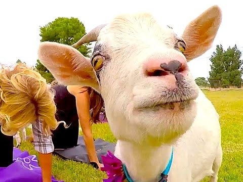 Workout with Goats: 3 Fun New Ways to Get Fit