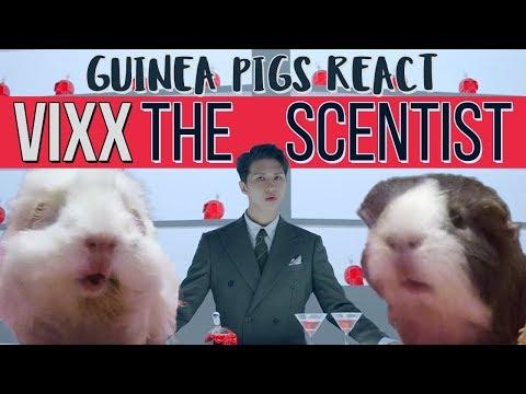 Guinea Pigs React: 빅스 VIXX - 향 (Scentist)