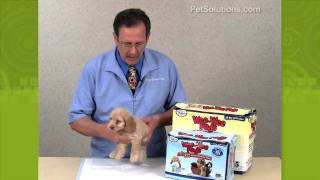 Petsolutions: How To Use Wee Wee Pads With Your Dog Or Puppy