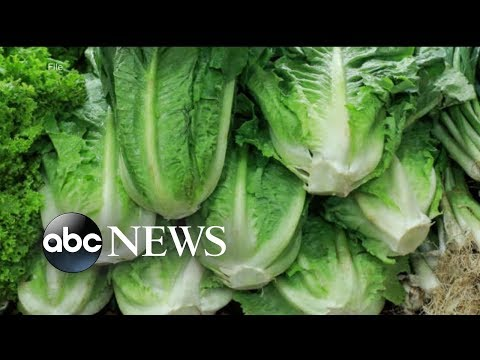 Government expands warning over contaminated romaine lettuce